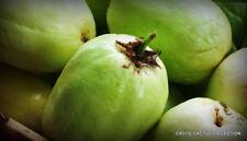 Giant Granadilla passiflora quadrangularis grenadilla passionfruit seed 10 seeds