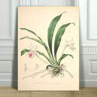 """JEAN LINDEN - Beautiful Pink Orchid #12 - CANVAS ART PRINT POSTER - 12x8"""""""