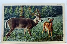 Animal Deer Postcard Old Vintage Card View Standard Souvenir Postal Post PC