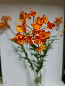 6 X Artificial tree Orchid Plant Flower Stems, Orange, With Roots 90cm Length