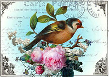 Carte Postale Bird Roses Collage Quilt Block FrEE ShiP WoRld WiDE (P3 c