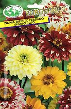 30 Semi/Seeds ZINNIA Tappeto Persiano Miscuglio