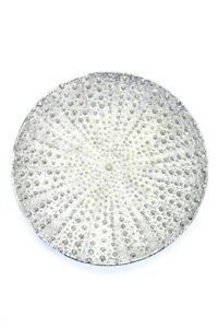 Michael Aram Stainless Steel Ocean Sea Urchin Round Platter