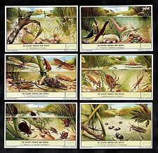 Pond Life Cards Set Liebig 1957 Beetles Dragonfly Leech Hydra Water Scorpion
