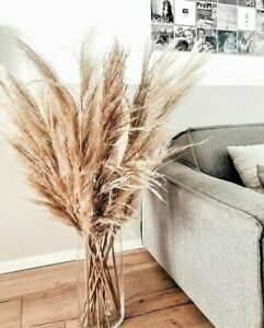 3 Stem -118cm Tall Natural Dried Pampas Grass (plume max 31 inches)