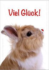 DIN A6 Postkarte Tierpostkarte Grußkarte Kaninchen Marienkäfer Hase Viel Glück!