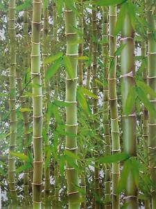 3D Effect Bamboo Forest Photo Mural Wallpaper Jungle Tropical Trees Green Shades