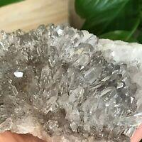 518g Natural Clear Chrysanthemum Quartz Crystal Cluster Specimen healing L356