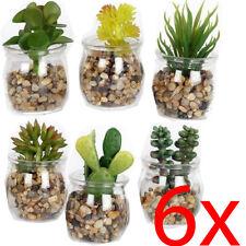 SET OF 6 SUCCULENT PLANT FLOWER CACTUS IN GLASS POT DECORATION ARTIFICIAL HOME