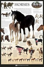 Educational Wall Poster - Horses Through Time