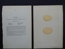 Rev. F.O. Morris, Nests and Eggs, c. 1871 S6#33 Pochard