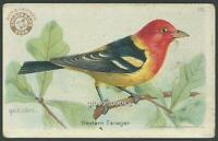 Arm and Hammer Baking Soda Useful Birds Western Tanager Victorian Trade Card