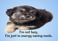 METAL REFRIGERATOR MAGNET Puppy Dog Not Lazy In Energy Saving Mode Humor Dogs