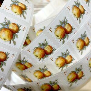 US # 5037 1c Apples (2017) - 100 Stamps / Coil Single Strip (Fruit) MNH