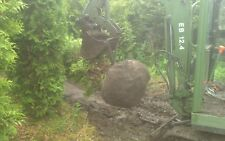 Thuja brabant, (keine smaragd), 500cm, Hamburg, lebensbaum, hecke, anlieferung