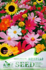 Original Package 200 Fast Growing Wildflowers Fix Seeds Colorful Flowers K008