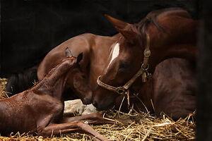 ClearOFF DEquine 25kg Natural Horse Pony LICE STABLE MITE KILLER MANGE THRUSH