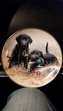 "Franklin Mint ""Beginners Luck"" Black Lab Retriever Puppies Duck Collector Plate"