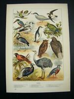 1889 Antique Original Victorian Chromolithograph Print ~ BIRDS