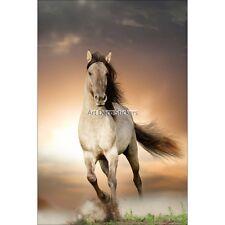 Magnete Da Frigorifero decocrazione Cavallo al galoppo 60x90cm ref 6251 6251