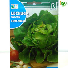 500 graines LAITUE ROMAINE MINIATURE K20 LETTUCE SEEDS Lactuca Sativa LITTLE GEM