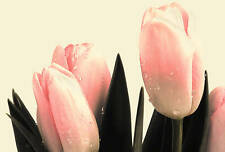 Canvas Picture Floral Pink Cream Flowers Tulips Framed