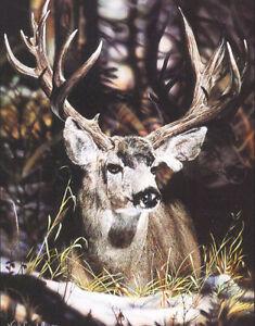 Vivi Crandall Shadow Play Whitetail Deer Ltd Ed Artist Proof Print 30x24
