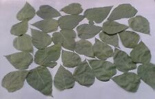 Mulberry Dried Leaves 50 or 100 pcs - Shrimp Food Organic - the best treat!