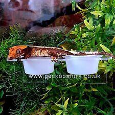 2 x GECKO ACRYLIC FEEDING LEDGE CRESTED GECKO, SMALL GECKO LEDGE