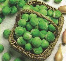 Semillas y bulbos de verduras de otoño