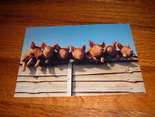 Mike Maloney 7 LITTLE PIGS WENT TO MARKET New POSTCARD Art Unlimited Amsterdam