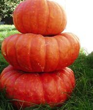 Pumpkin seeds Rouge Vif d'Etampes Ukraine Heirloom Vegetable Seeds