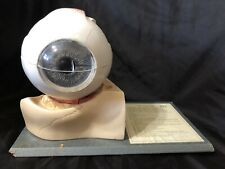 Somso Cs11 Eyeball Enlarged 5 Times 7 Parts Eye Anatomical Model Vintage