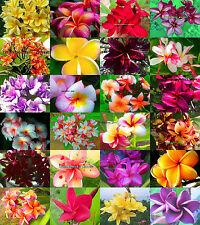 "NEW! Fresh Plumeria/Plants/Flowers/""Mixed 24 Types""  100 Seeds"