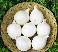 Seeds Onion White Queen Giant Vegetable Organic Heirloom Russian Ukraine