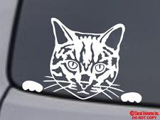 CAT FACE Vinyl Decal Sticker Car Rear Window Wall Bumper Kitten Love Tabby Funny