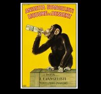 Vintage Funny Monkey Drinking Liquor PHOTO Circus Chimpanzee, Freak Strange Pic