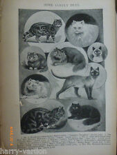 Louis Wain Cats Man o War Battleship Navy Cricket Sketches Rip Victorian 1898