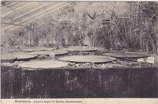 uralte AK, Magdeburg, Victoria Regia im Gruson-Gewächshaus 1908