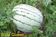 50 DIXIE QUEEN WATERMELON White & Red Citrullus Lanatus Melon Fruit Vine Seeds