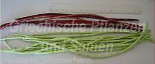 Bohne superlange 50 cm Bohnen 2 Sorten red noodle + grün 40 Samen Gemüse