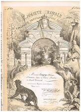 Societe Royale de Zoologie...Bruxelles 1878, beautiful