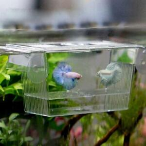 Acrylic Fish Tank Breeding Isolation Box Aquarium Hatchery Incubator Holder