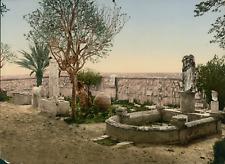 Carthage. Jardin du musée I. (TU)  vintage photochrom from Photochrom Zurich arc