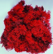 PRESERVED REINDEER MOSS - RED - 75g