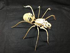 Énorme découpe laser bois spider/modèle puzzle kit