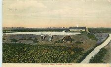 1907-1915 Postcard; Irrigating Beets, Garden City KS Finney County Posted
