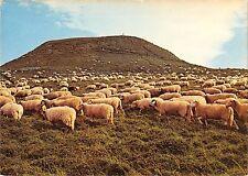 BR54065 Bourboule sommet de la Banne d oranche ship mouton france