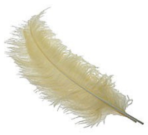 Buy 2get1 free Feathers for centre piece Ostrich feather cream artificial floral