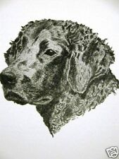C. Francis Wardle 1935 Curly Coated Retriever Art Print Matted